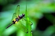 新加坡双溪布洛自然公园风景图片_22张