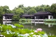 杭州西湖的荷花图片_19张