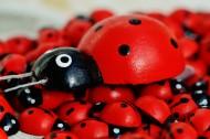 可愛彩色小瓢蟲圖片_15張