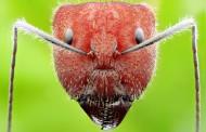 各種螞蟻微距圖片_11張