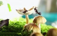 微距螞蟻圖片_9張