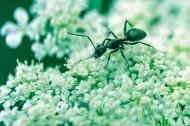螞蟻高清圖片_12張
