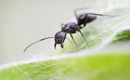 螞蟻微距圖片_10張