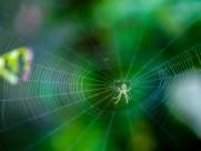 正在结网的蜘蛛图片_7张