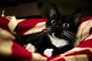 黑貓圖片_16張