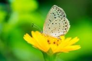 清新自然的蝴蝶圖片_24張