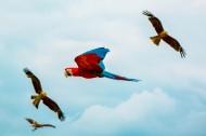 聪明的鹦鹉图片_10张