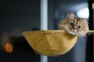 Ben Torode:可爱小猫黛西图片_15张