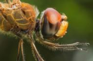蜻蜓局部特寫圖片_6張