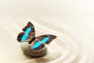 鹅卵石上蝴蝶图片_6张