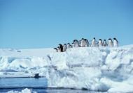 高清企鹅群居生活图片_29张
