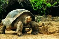 大龟图片_48张