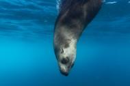 丑萌可爱的海豹图片_10张