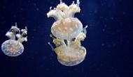 海里生活的水母图片_11张