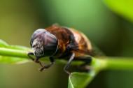 蜜蜂微距圖片_8張