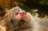 可爱的猴子图片_16张