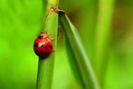 甲虫图片_22张