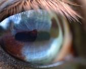 馬的眼睛特寫圖片_16張