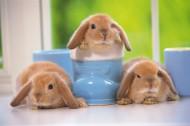 软萌可爱的小兔子图片_15张