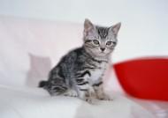 可爱小猫图片_9张