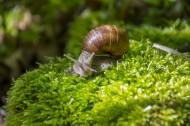 可爱小巧的蜗牛图片_11张