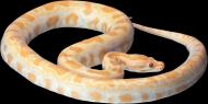 各类蛇的透明背景PNG图片_19张