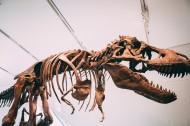 恐龙化石图片_13张