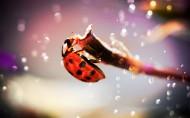 瓢蟲圖片_14張
