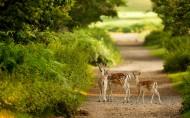 森林里的鹿圖片_24張