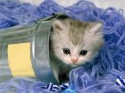 可爱猫咪图片_31张