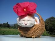 超级憨态可爱的猫叔图片 第三辑_73张
