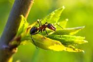 螞蟻高清圖片_15張