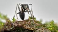 螞蟻圖片_12張