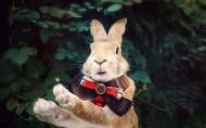 萌宠的兔子图片_5张