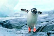 南极企鹅图片_11张