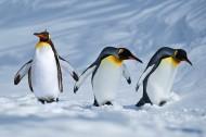 企鹅图片_9张
