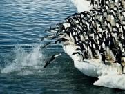 南极企鹅图片_29张