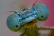 蜻蜓的眼睛图片_10张
