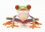 青蛙圖片_70張