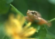 可愛青蛙和植物圖片_8張