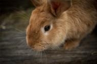 毛茸茸的兔子图片_15张