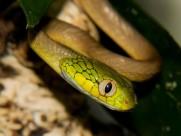 蛇图片_36张