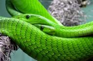 恐怖的蛇图片_10张