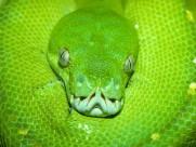 蛇图片_20张