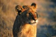 母狮图片_15张