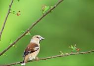 四季鸟鸣图片_67张