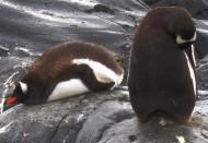 南极企鹅图片_13张