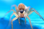 蜘蛛微距图片_10张