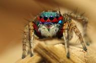色彩斑斓的蜘蛛图片_11张