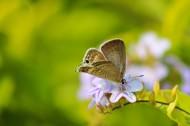 停留在花上的蝴蝶图片_15张